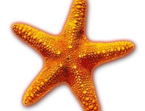 Starfish Montessori Preschool